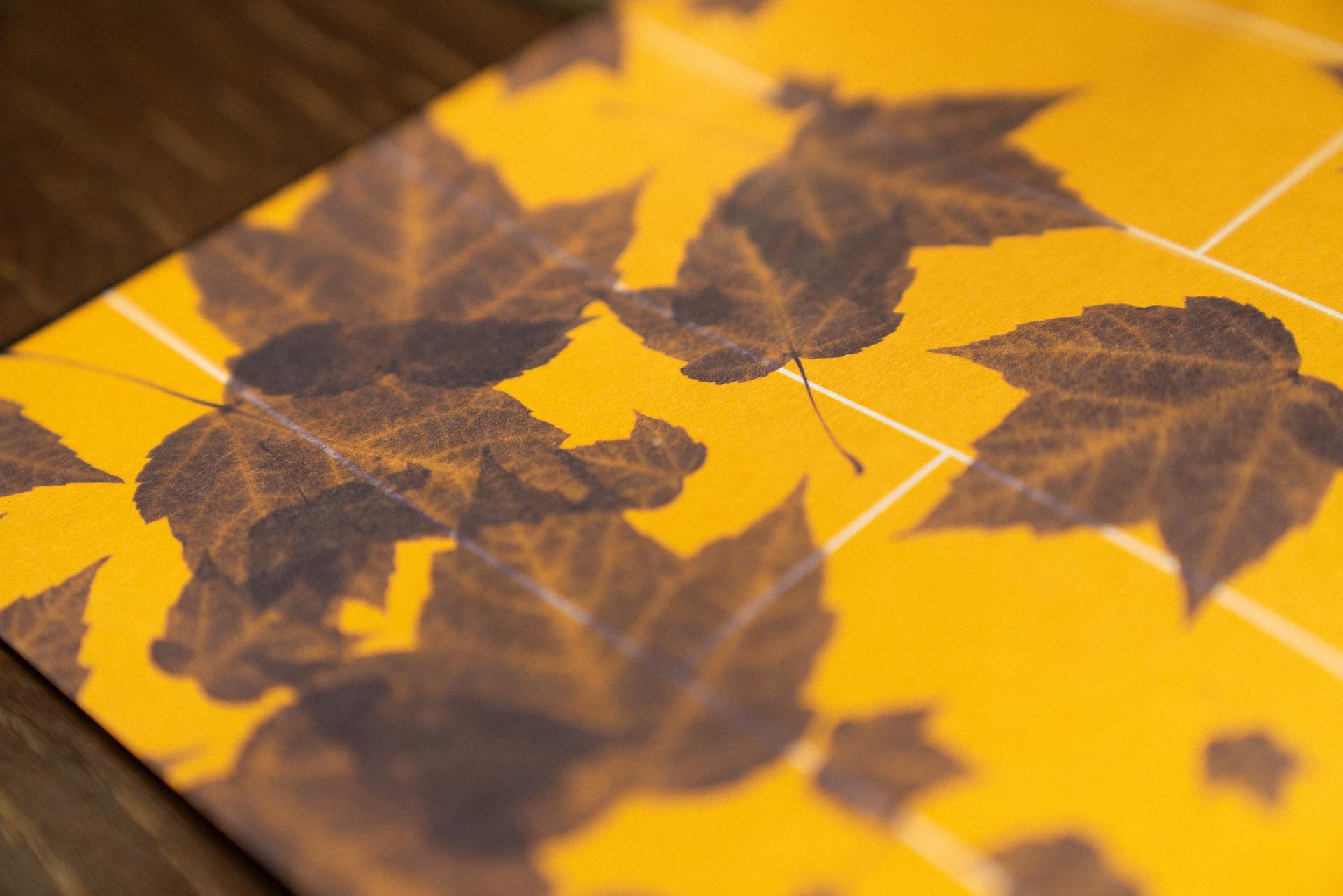 Berkeley Haas brochure printed leaves close up